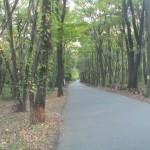 木もれびの森