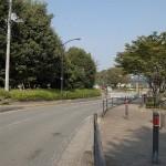 並木通り(麻溝公園前)
