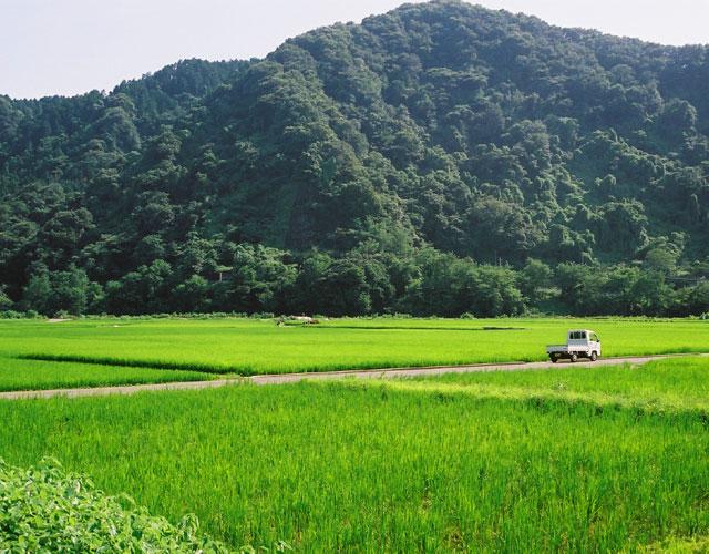 諏訪森下(中州)